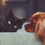 Naturoterapia para mascotas